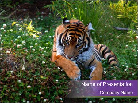 Bengal tiger in zoo powerpoint template backgrounds id bengal tiger in zoo powerpoint templates toneelgroepblik Gallery