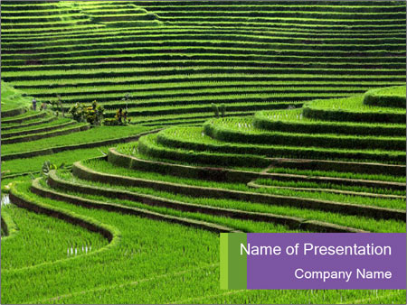 Green rice fields in indonesia powerpoint template backgrounds green rice fields in indonesia powerpoint template toneelgroepblik Gallery