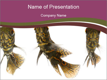 Fish Tails PowerPoint Template