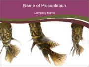 Fish Tails PowerPoint Templates