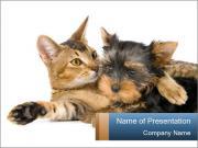 Kitten and Puppy Best Friends PowerPoint Templates