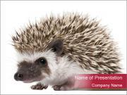Cute Hedgehog PowerPoint Templates
