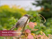 Small Sparrow Sitting on Autumn Tree PowerPoint Templates