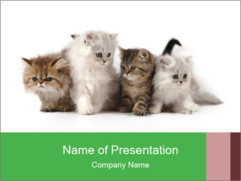 Cute Little Persian Kittens PowerPoint Template