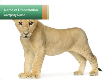 Cute Lion Cub PowerPoint Template