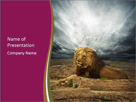 wild lion in africa powerpoint template & backgrounds id, Modern powerpoint