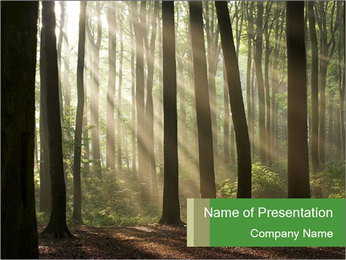 Morning in a Misty Forest PowerPoint Template