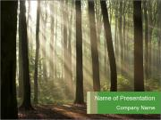 Morning in a Misty Forest PowerPoint Templates