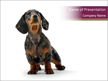 Cute Dachshund Puppy PowerPoint Template