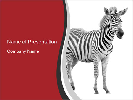 Zebra on white background powerpoint template backgrounds id zebra on white background powerpoint template toneelgroepblik Image collections