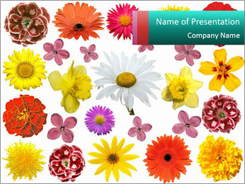Floral Background PowerPoint Template