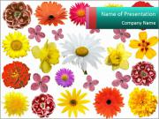 Floral Background PowerPoint Templates