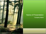 Sun Rays in a Deep and Mistic Forest PowerPoint Templates