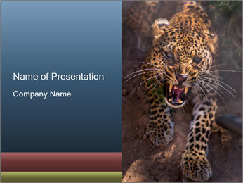 Hungry Leopard PowerPoint Template