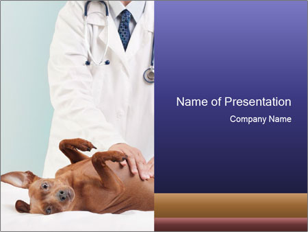 Small dog at veterinary clinic powerpoint template backgrounds small dog at veterinary clinic powerpoint templates toneelgroepblik Choice Image