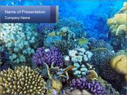 Colorful Corals PowerPoint Templates