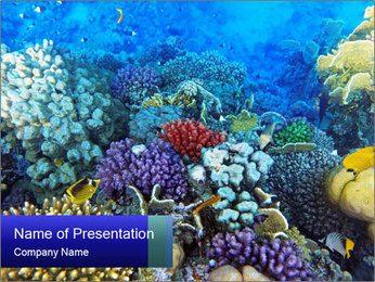 Beauty of the Sea PowerPoint Template
