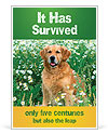 Purebred Golden Retriever Ad Template