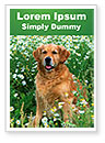 Purebred Golden Retriever Word Template