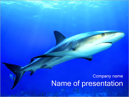 Shark PowerPoint Template & Backgrounds ID 0000002110 ...