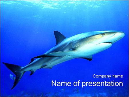 Shark Powerpoint Template Backgrounds Google Slides Id