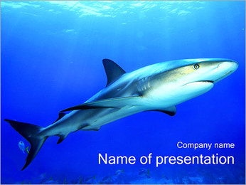 Shark PowerPoint Template