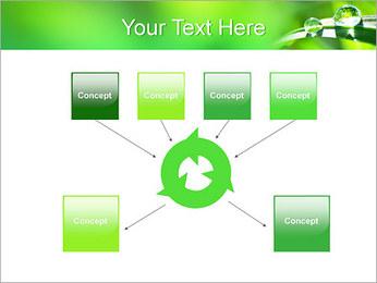 Gouttes d'eau sur l'herbe Modèles des présentations  PowerPoint - Diapositives 10