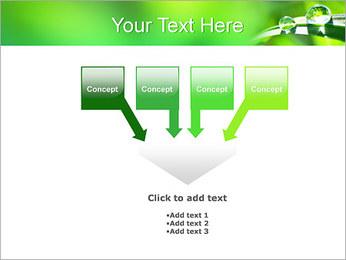 Gouttes d'eau sur l'herbe Modèles des présentations  PowerPoint - Diapositives 8