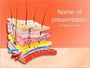Anatomía de la piel Plantillas de Presentaciones PowerPoint