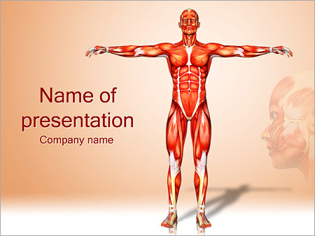 human body anatomy powerpoint template & backgrounds id 0000002393, Modern powerpoint