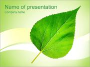 Green Leaf PowerPoint Templates