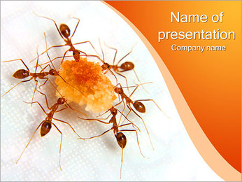 Ants With Sugar PowerPoint Template