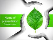 Hands With Green Leaf PowerPoint Templates