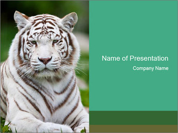 White Tiger in Zoo PowerPoint Template