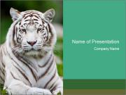 White tiger in zoo powerpoint template backgrounds id 0000020166 white tiger in zoo powerpoint templates toneelgroepblik Gallery