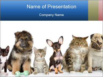Cute Home Pets PowerPoint Template