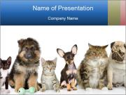 Cute Home Pets PowerPoint Templates