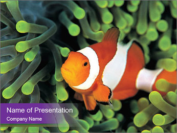 Clown Fish PowerPoint Template
