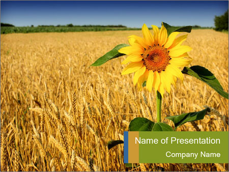 Sunflower Powerpoint Template – bellacoola.co