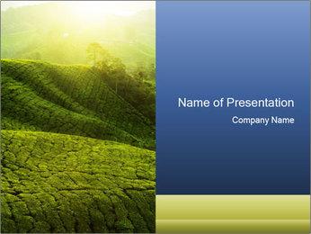 Endless Tea Plantation PowerPoint Template