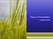 Organic Cereal PowerPoint Templates