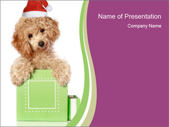 Poodle Puppy in Christmas Hat PowerPoint Template