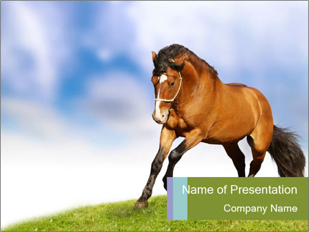 Freedom For Horse Powerpoint Template Backgrounds Google Slides