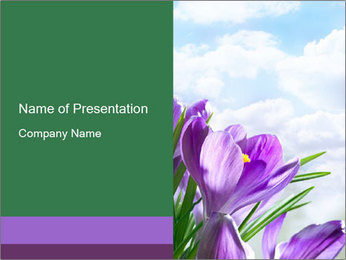 Lilac Spring Flowers PowerPoint Template