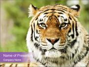 Zoo modelos de apresentaes powerpoint smiletemplates siberian tiger in zoo modelos de apresentaes powerpoint toneelgroepblik Gallery
