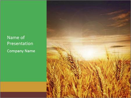 barley powerpoint template smiletemplates com