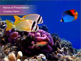 Colorful Fish in Aquarium PowerPoint Template