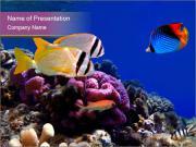 Colorful Fish in Aquarium PowerPoint Templates