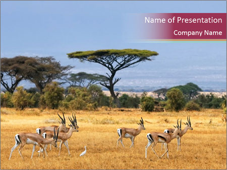 Trip to kenya powerpoint template backgrounds id 0000023418 trip to kenya powerpoint templates toneelgroepblik Image collections