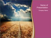 Wheat Field in Sunlight PowerPoint Templates